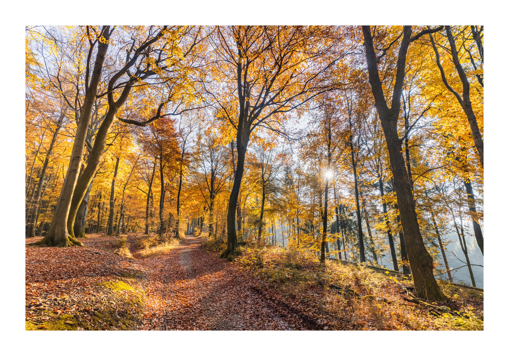 Hermannsweg im Teutoburger Wald