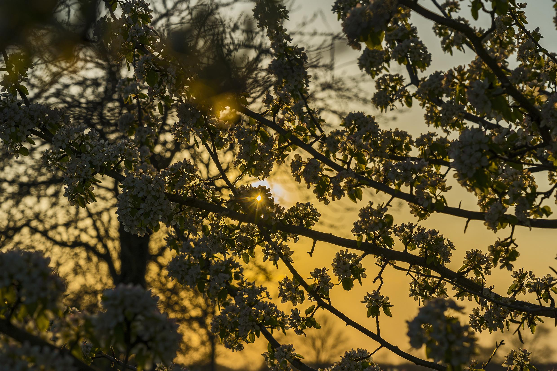 Nature spring sunset light 20200406 20.jpg