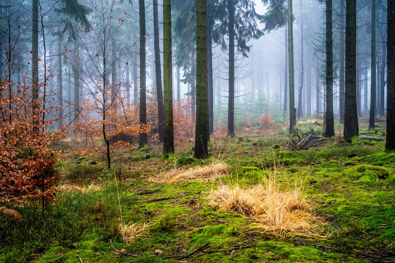 Odenwald Dez 20_1.jpg